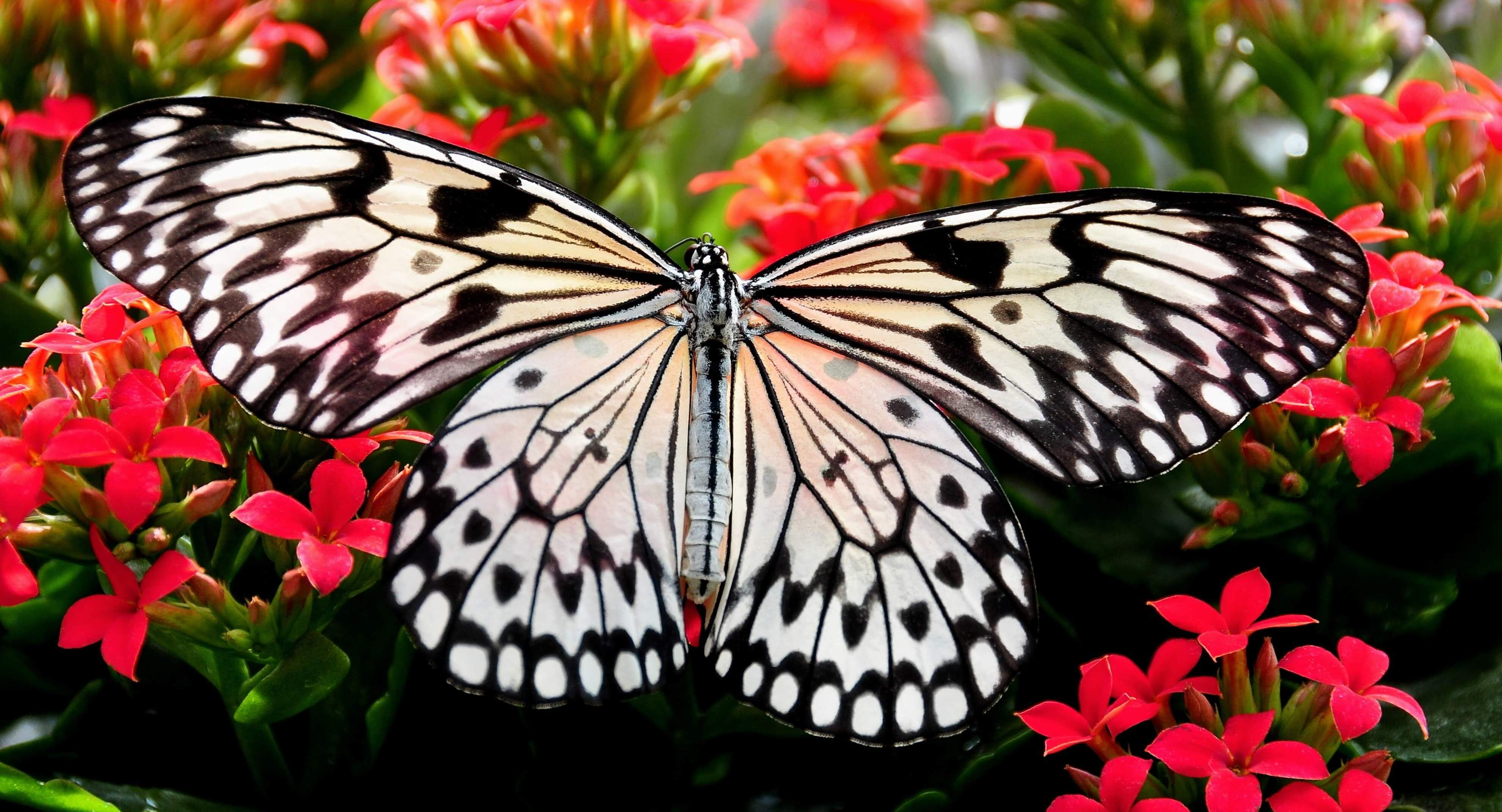 von der Raupe zum Schmetterling